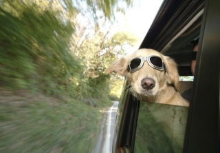 Treating a fear of car journeys using desensitization and counter-conditioning